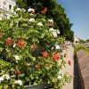 Blumen am Kanal
